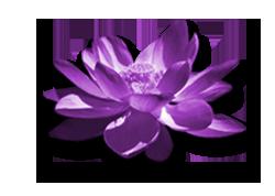 flor-reiki-violet